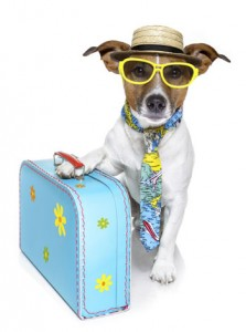 viajar-con-mascotasG-223x300